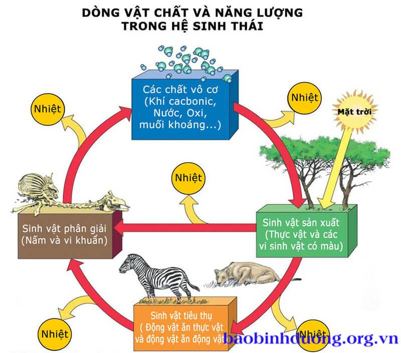 Hệ sinh thái gồm có 3 loại sinh vật: